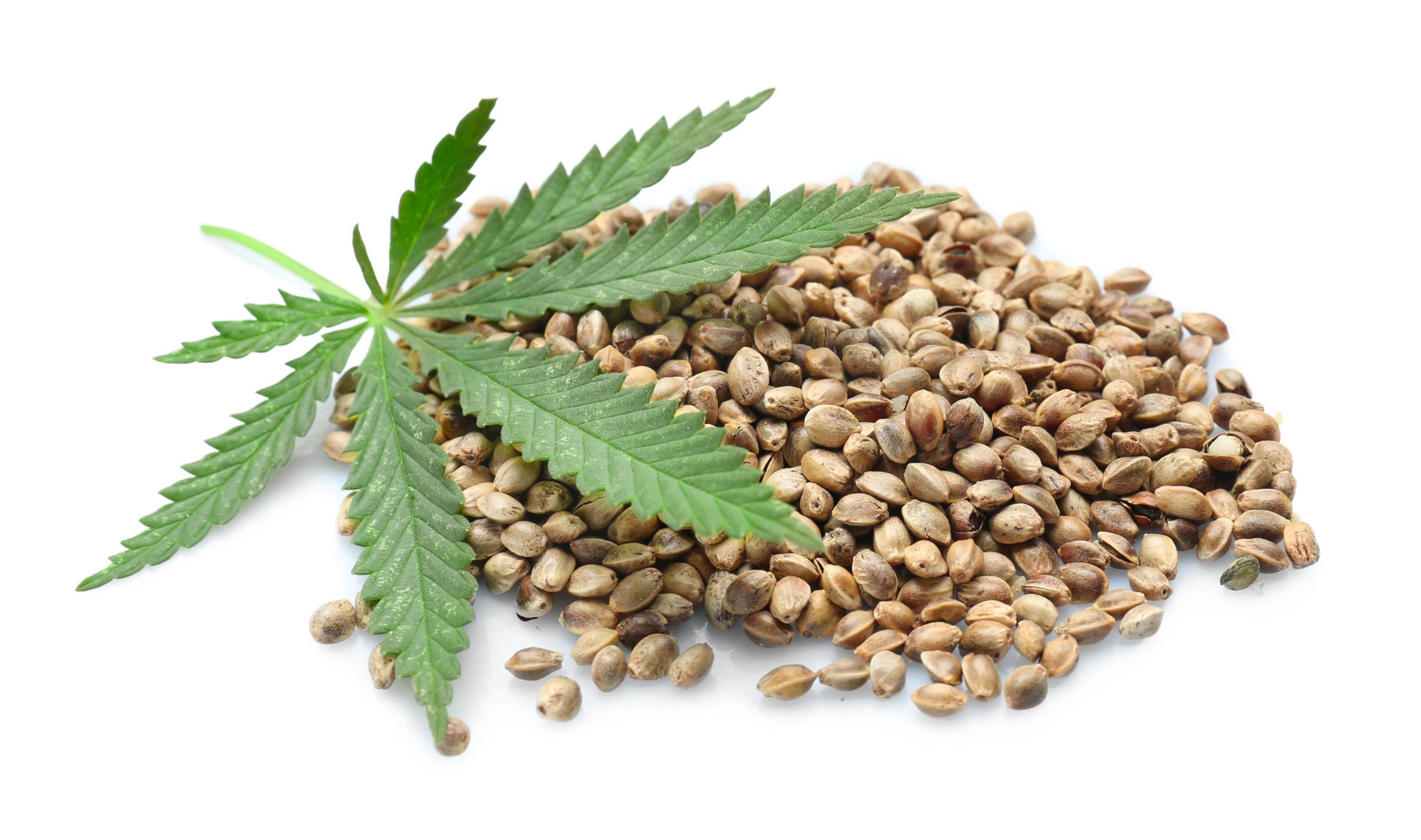 benefits of hemp seeds